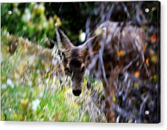 The Deer Acrylic Print by Nature Macabre Photography