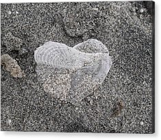 The Delicate Heart Acrylic Print