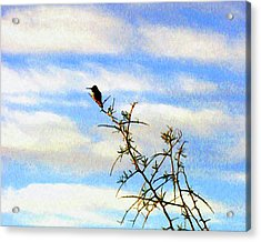 Acrylic Print featuring the digital art The Desert Hummingbird by Timothy Bulone