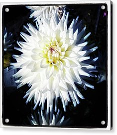 Acrylic Print featuring the photograph The Devoted Dahlia. The White Dahlia by Mr Photojimsf