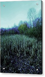 The Diary Acrylic Print by Dean Edwards