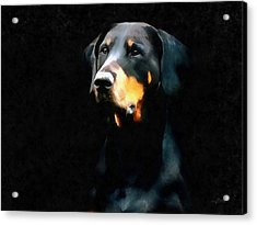 The Doberman Pinscher Acrylic Print