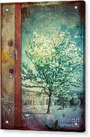 The Door And The Tree Acrylic Print by Tara Turner