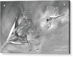 The Dragonfly And The Flower Acrylic Print by Linda Lees
