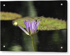 The Dragonfly And The Lily Acrylic Print by Gary Dean Mercer Clark