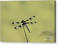 The Dragonfly Acrylic Print