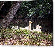 The Ducks Acrylic Print by Eva Thomas