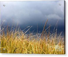 Acrylic Print featuring the photograph The Tall Grass Waves In The Wind by Dana DiPasquale