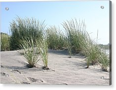 The Dunes Acrylic Print by Dennis Curry