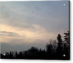 Acrylic Print featuring the photograph The Eagle Has Flown by Kent Lorentzen