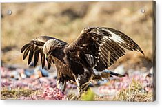The Eagle Have Come Down Acrylic Print by Torbjorn Swenelius