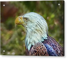 Acrylic Print featuring the photograph The Eagle Look by Hanny Heim