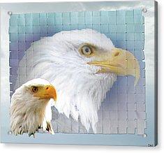 The Eagles Focus Acrylic Print by Debra     Vatalaro