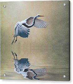 The Early Bird Acrylic Print by Brian Tarr