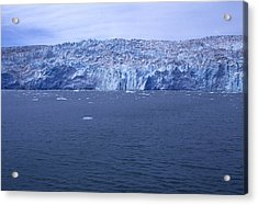 The Edge Of Columbia Glacier, Alaska Acrylic Print by Stacy Gold