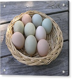 The Eggs Acrylic Print by Janis Beauchamp
