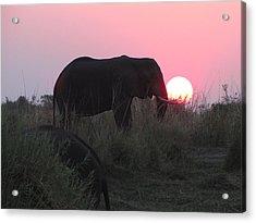 The Elephant And The Sun Acrylic Print