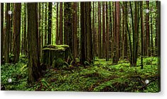The Emerald Forest Acrylic Print