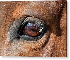 The Equine Eye Acrylic Print by Terry Kirkland Cook