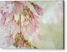 Acrylic Print featuring the photograph The Essence Of Springtime  by Connie Handscomb
