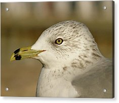 The Eye Of The Seagull Acrylic Print