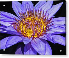 The Eye Of The Water Lily Acrylic Print