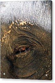 The Eye Of Wisdom Acrylic Print by Kelly Jones