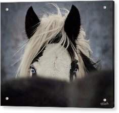 The Eyes Have It Acrylic Print by Elizabeth Sescilla