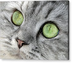 The Eyes Have It Acrylic Print by Graham Taylor
