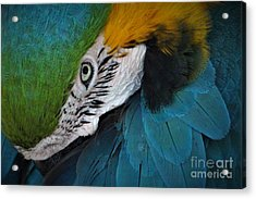 The Eyes Have It Acrylic Print by Paulette Thomas