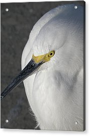 The Eyes Have It Acrylic Print by Rose  Hill