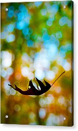 The Fall Acrylic Print by Ryan Heffron