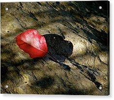 The Fallen Leaf Acrylic Print