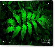 Acrylic Print featuring the photograph The Fern by Elfriede Fulda