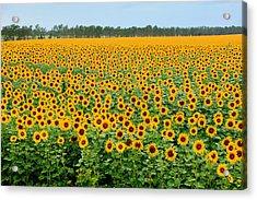 The Field Of Suns Acrylic Print