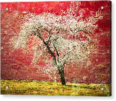 The First Blossoms Acrylic Print by Tara Turner