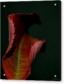 Acrylic Print featuring the photograph The First Day Of Fall by Marija Djedovic