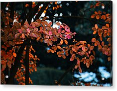 The Flair Of Autumn Acrylic Print by Nicole Frischlich