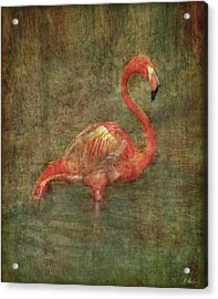 Acrylic Print featuring the photograph The Flamingo by Hanny Heim