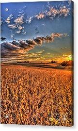 The Fleeting Sunset Missouri Soybean Farming Art  Acrylic Print