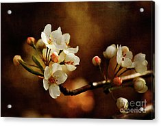 The Fleeting Sweetness Of Spring Acrylic Print by Lois Bryan