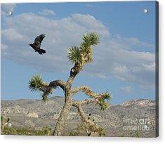 Acrylic Print featuring the photograph The Flight Of Raven. Lucerne Valley. by Ausra Huntington nee Paulauskaite