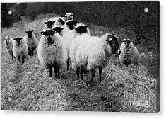 The Flock 1 Acrylic Print