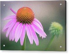 Acrylic Print featuring the photograph The Flower At Mattamuskeet by Cindy Lark Hartman