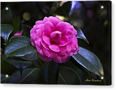 The Flower Signed Acrylic Print