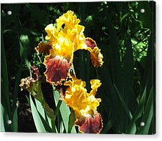 The Flowering Torch Acrylic Print by Dennis Wilkins