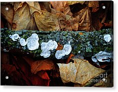 Acrylic Print featuring the photograph The Forest Floor - Cascade Wi by Mary Machare