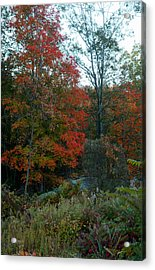 Acrylic Print featuring the photograph The Forest by Joseph G Holland