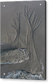 The Forest On The Beach Acrylic Print