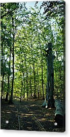 The Forest Acrylic Print